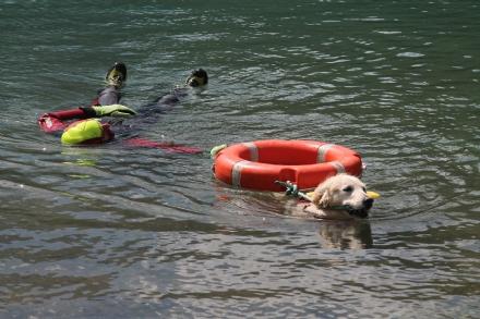 CERESOLE REALE - I cani Terranova nel lago per labilitazione al soccorso in acqua