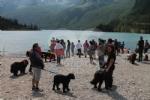 CERESOLE REALE - I cani Terranova nel lago per labilitazione al soccorso in acqua - immagine 11