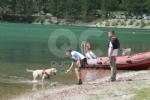 CERESOLE REALE - I cani Terranova nel lago per labilitazione al soccorso in acqua - immagine 1