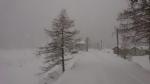 CANAVESE SOTTO LA NEVE - I fiocchi bianchi hanno iniziato a cadere copiosi anche in pianura - FOTO - immagine 13