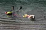 CERESOLE REALE - I cani Terranova nel lago per labilitazione al soccorso in acqua - immagine 3