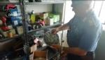 CANAVESE - Ricambi auto scadenti spacciati per originali: sequestri dei carabinieri per 100 mila euro. Quattro meccanici denunciati - VIDEO - immagine 4