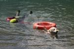 CERESOLE REALE - I cani Terranova nel lago per labilitazione al soccorso in acqua - immagine 4