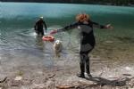 CERESOLE REALE - I cani Terranova nel lago per labilitazione al soccorso in acqua - immagine 5