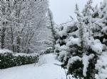 CANAVESE SOTTO LA NEVE - I fiocchi bianchi hanno iniziato a cadere copiosi anche in pianura - FOTO - immagine 24