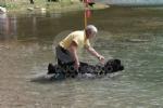 CERESOLE REALE - I cani Terranova nel lago per labilitazione al soccorso in acqua - immagine 6