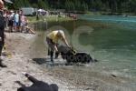 CERESOLE REALE - I cani Terranova nel lago per labilitazione al soccorso in acqua - immagine 8