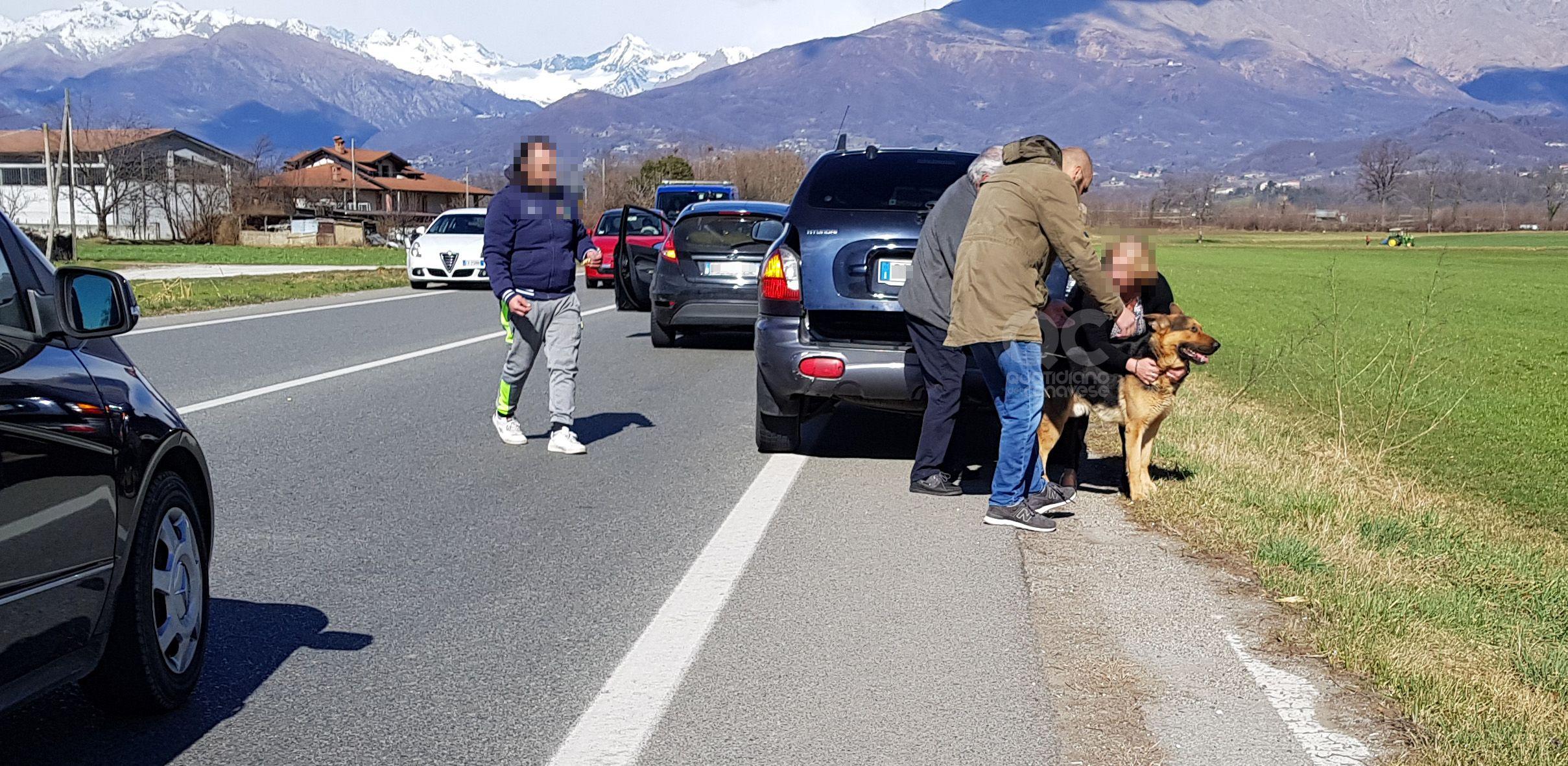 CASTELLAMONTE-OZEGNA - Traffico bloccato sulla provinciale per salvare un cane scappato da un giardino