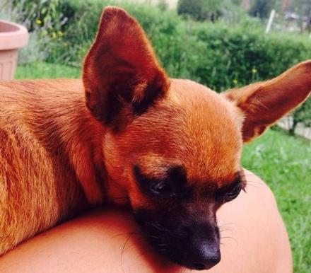 CUORGNE' - Ha trovato casa in Canavese uno dei cuccioli salvati da Striscia la Notizia
