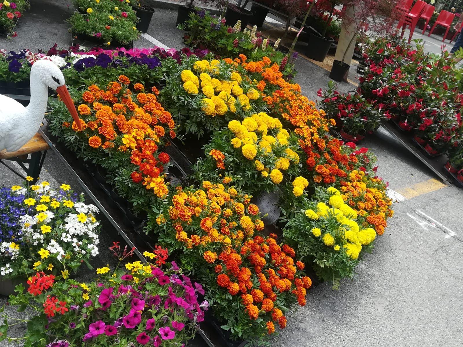 OZEGNA - Successo «colorato» per l'evento dedicato ai fiori - FOTO