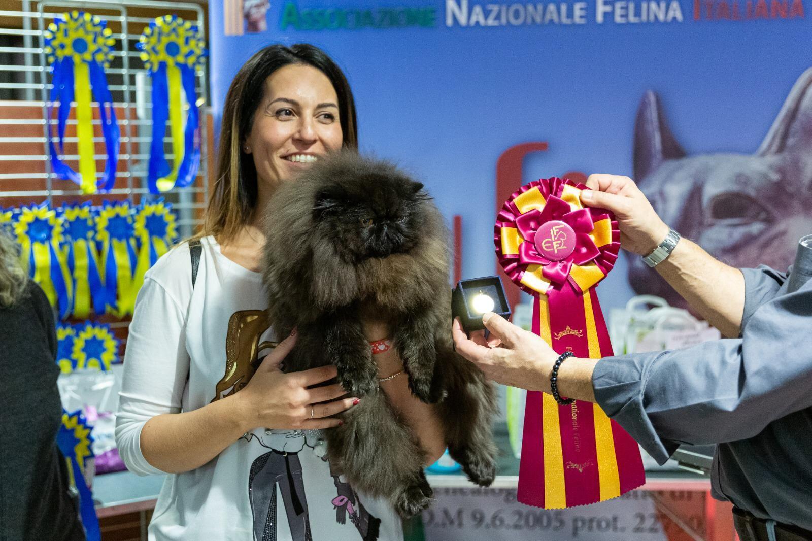 CUORGNE' - In 1300 per la mostra internazionale dei gatti - FOTO