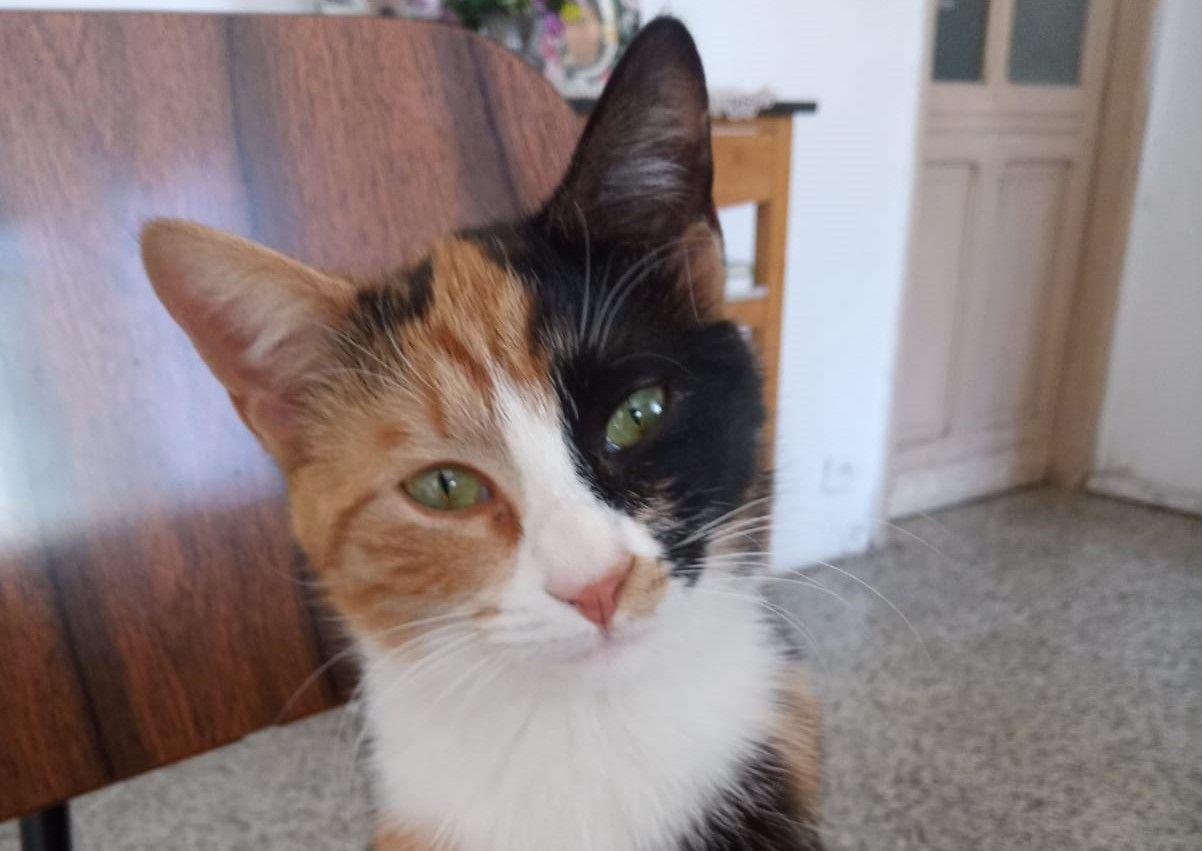 PAVONE CANAVESE - Appello per ritrovare questa bella gattina tricolore