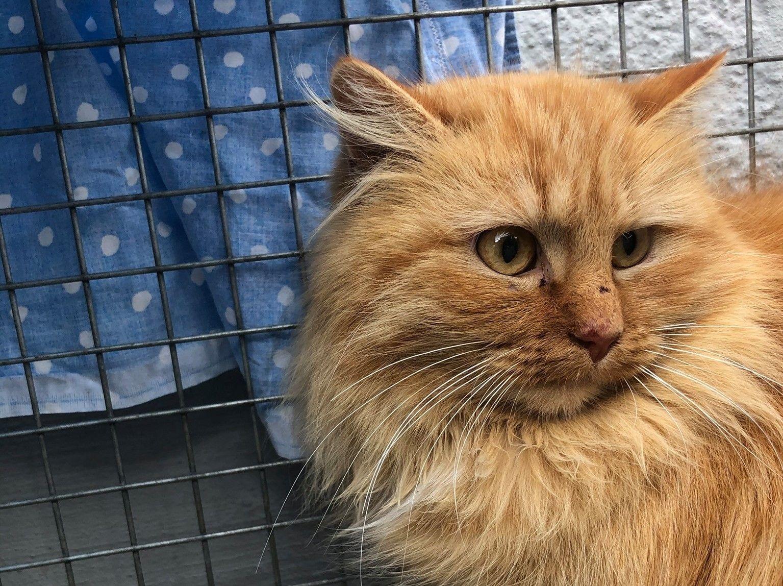 ANDRATE - La colonia felina ha bisogno di qualche nuovo volontario amante dei mici