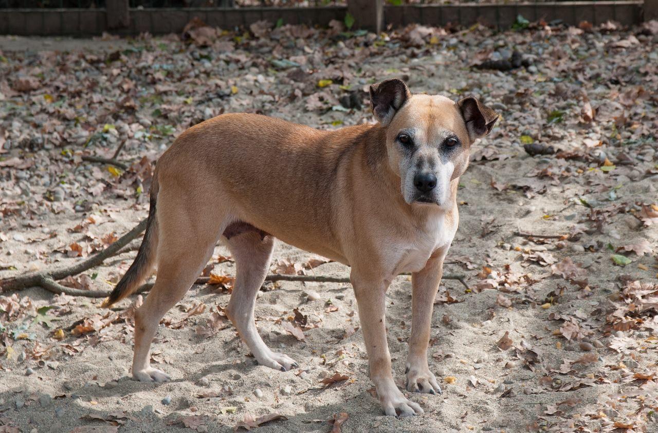 OGLIANICO - Il corso per Dog Sitter aiuta il rifugio «La Quercia Rossa»