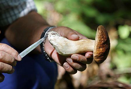 IVREA - Parte il corso per riconoscere e vendere i funghi in sicurezza