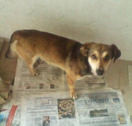 BUROLO - Cucciolo ritrovato vicino al Carrefour