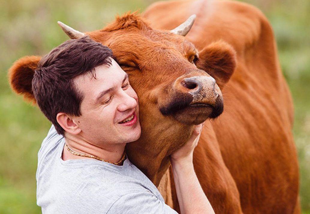 PET - La vacca da relax