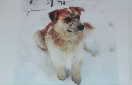 CASTELLAMONTE - Appello per ritrovare il cane Motaki