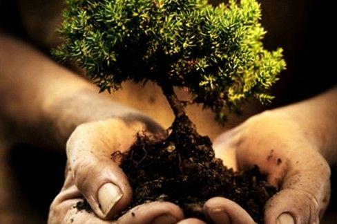 CANAVESE - Contro l'emergenza clima si piantano nuovi alberi