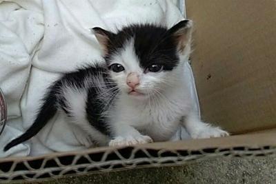 IVREA - Chiude tre gatti in una stanza senza cibo: condannata