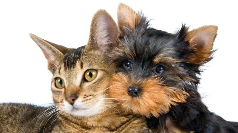 MONTANARO - Un incontro per imparare a capire cani e gatti