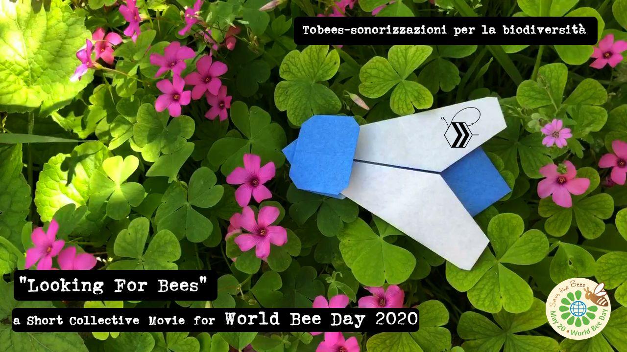 GIORNATA MONDIALE DELLE API - Le api del Canavese partecipano al cortometraggio «Looking For Bees» - VIDEO