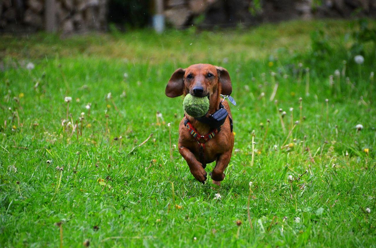 CIRIE' - Apre «Il giardino di Fido»,la nuova area verde riservata ai cani e ai loro padroni