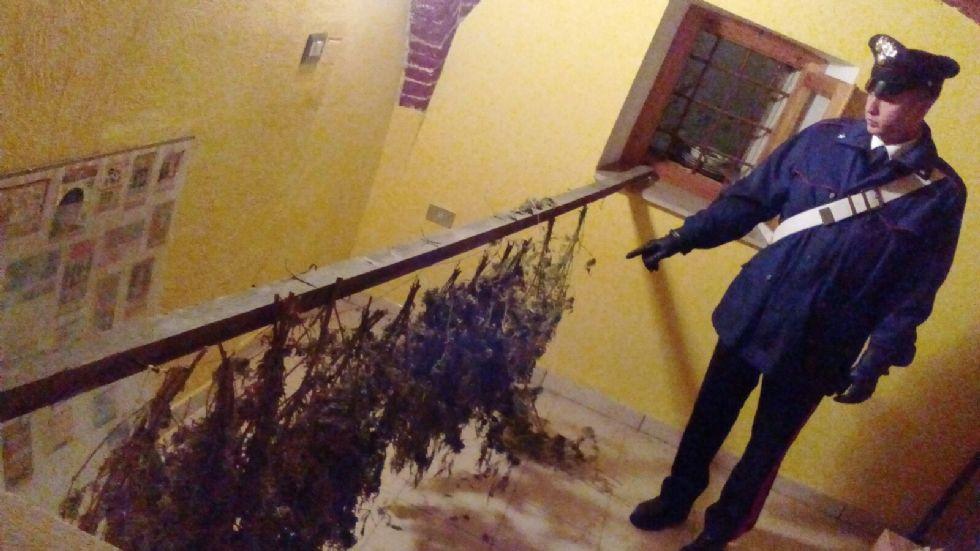 VISTRORIO - Tredici piante di canapa in casa: denunciato - FOTO