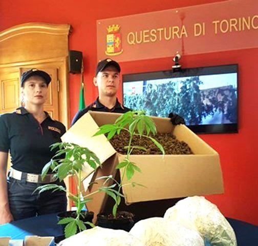 BORGARO-MAPPANO - Alla cascina Cà Bianca una maxi piantagione di marijuana: due arresti