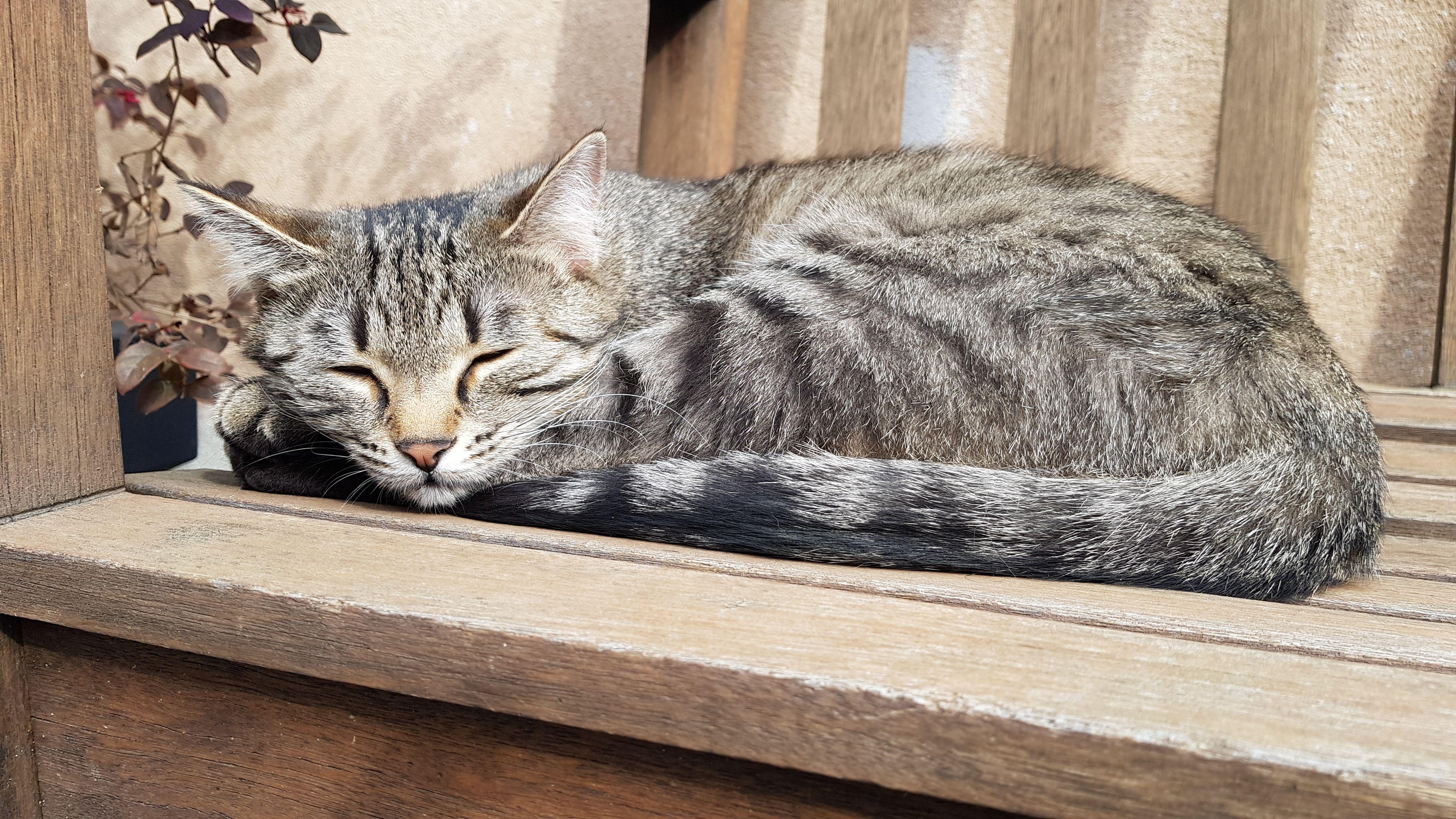 Gli accessori indispensabili per accogliere un gatto in casa
