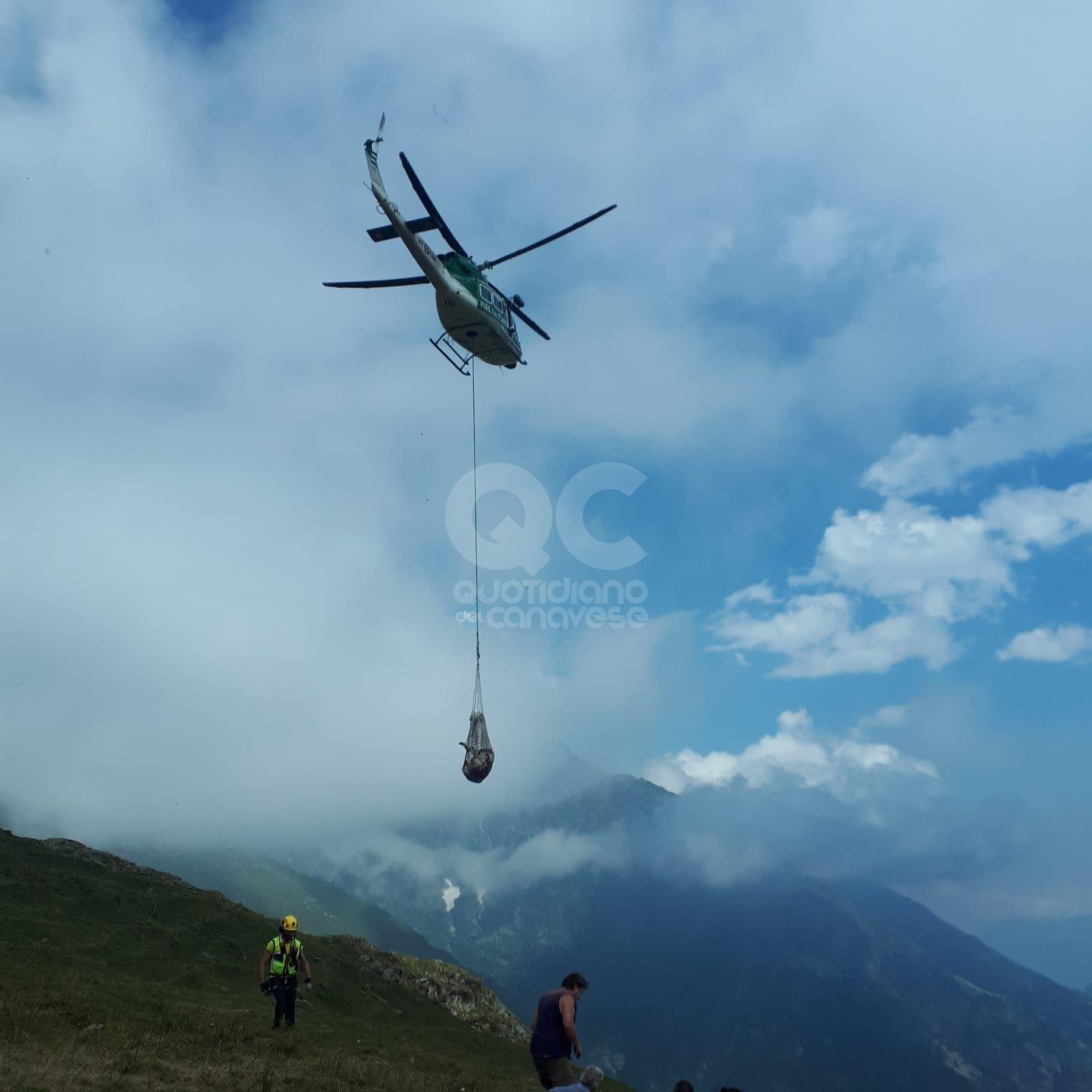 NOASCA - Mucca ferita salvata in quota dai vigili del fuoco con l'elicottero - FOTO