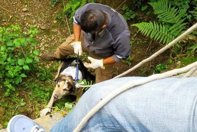 AGLIE' - Cane di sedici anni scivola in un fossato e rimane bloccato nel fango: salvato dalle Giacche Verdi - FOTO