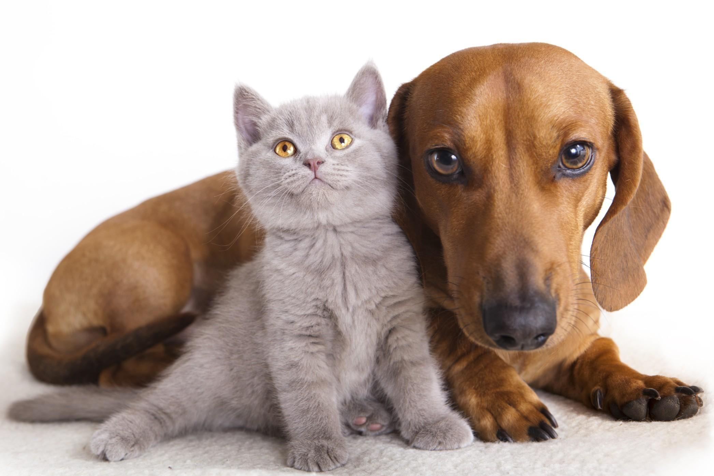 CUORGNE' - Un aiuto alle famiglie che non riescono ad acquistare cibo per gli animali domestici