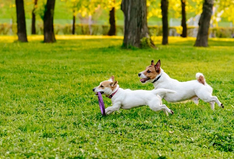 COVID - Come gestire il cane durante le passeggiate e nelle aree riservate
