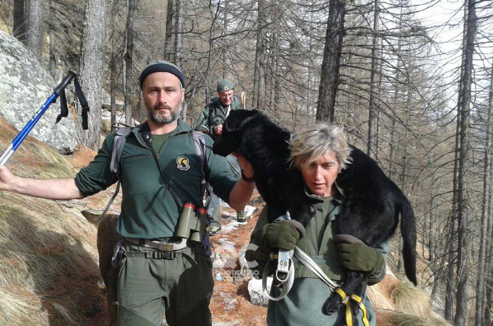 CERESOLE REALE - Così la guardaparco del Gran Paradiso ha salvato il cane Dana - FOTO