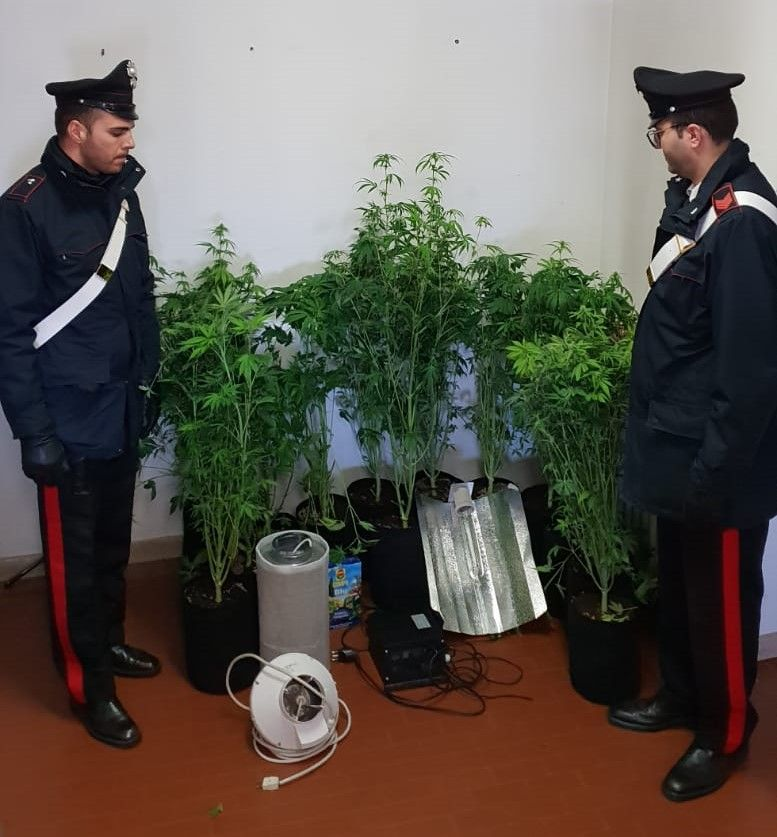 VALPERGA - Trasforma una stanza di casa in una serra per coltivare cannabis: 20enne denunciato dai carabinieri