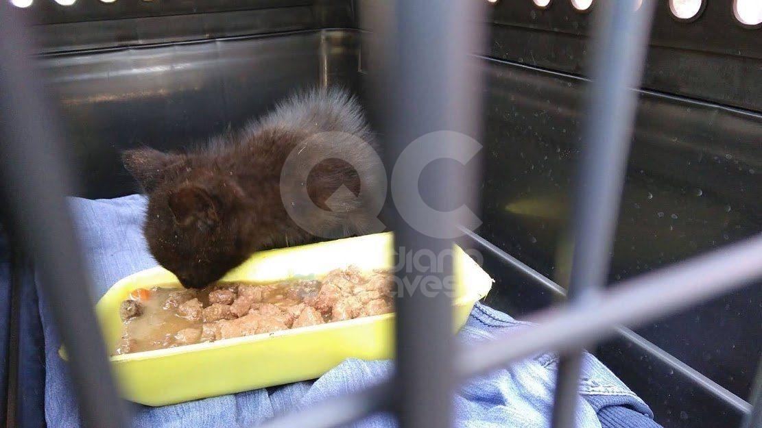 IVREA - I vigili del fuoco salvano la gattina Alessia caduta dentro uno scarico - FOTO