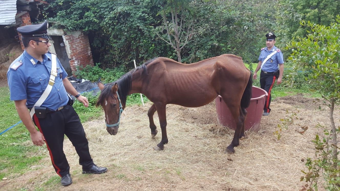 CORIO - Sette cani e un cavallo maltrattati: intervengono i carabinieri
