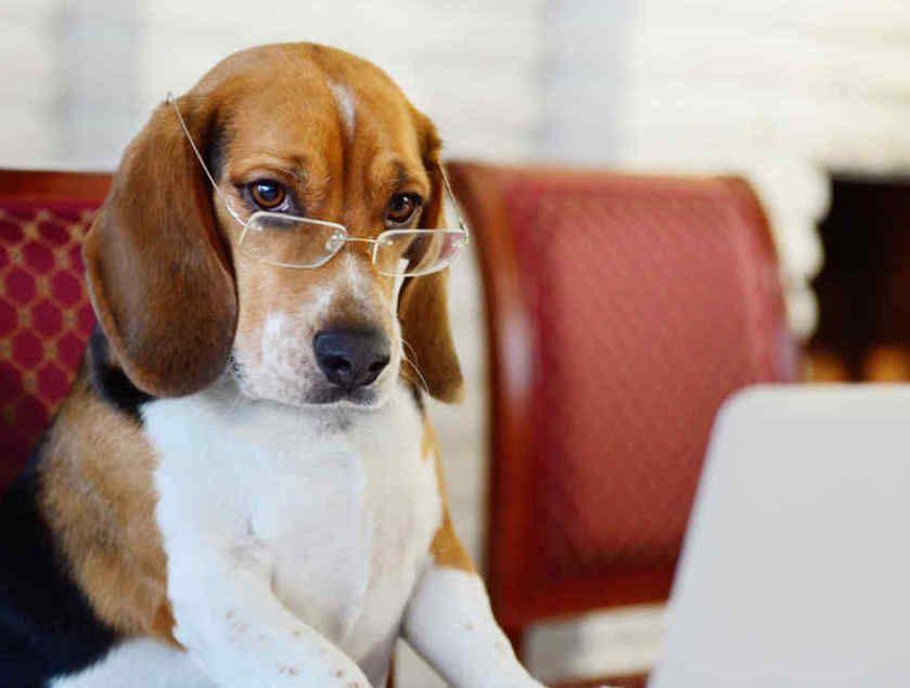 PET - La Giornata Mondiale del Cane in Ufficio
