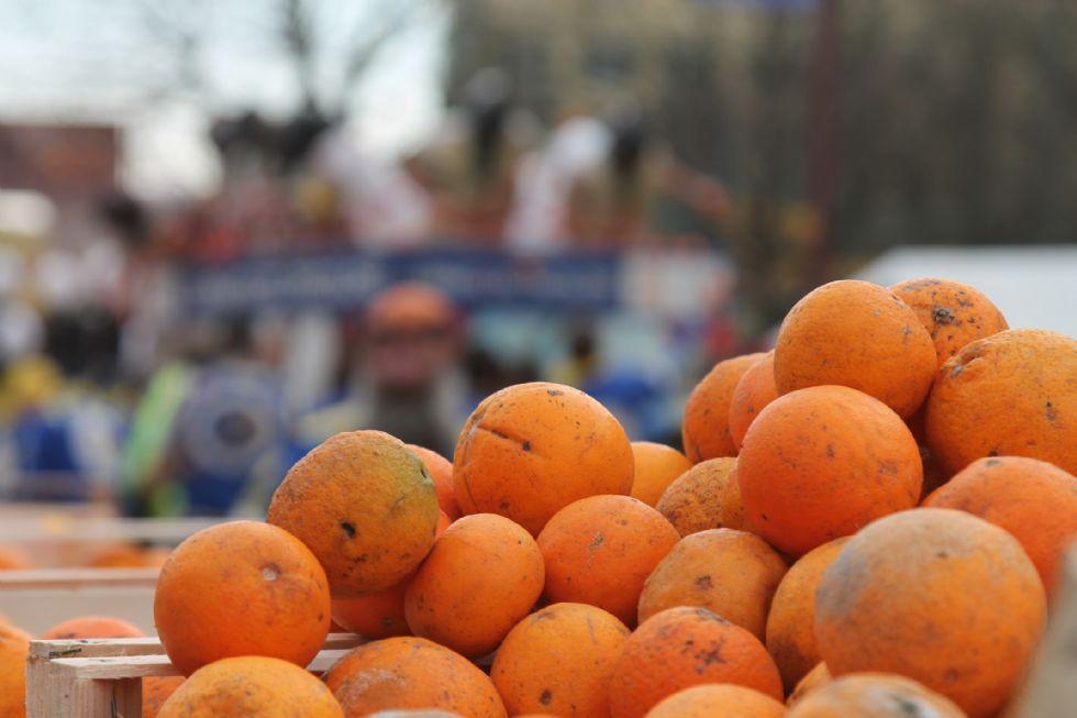 CARNEVALE DI IVREA - Nove mila quintali di arance pronte per la battaglia - FOTO e VIDEO