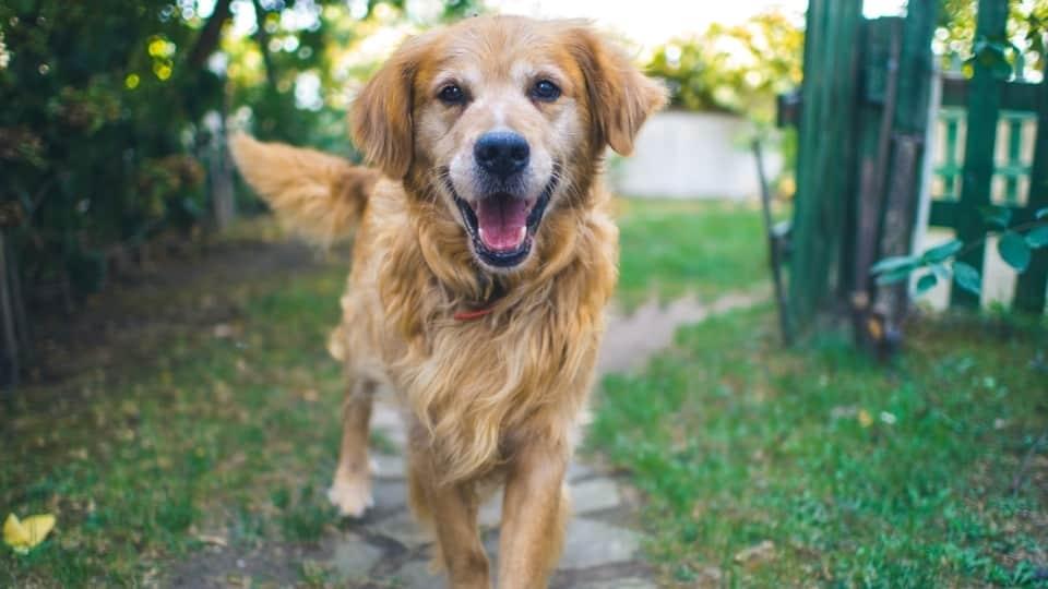 MONTANARO - Conosci il tuo cane? Tutti i perché sui comportamenti dei nostri amici a quattro zampe