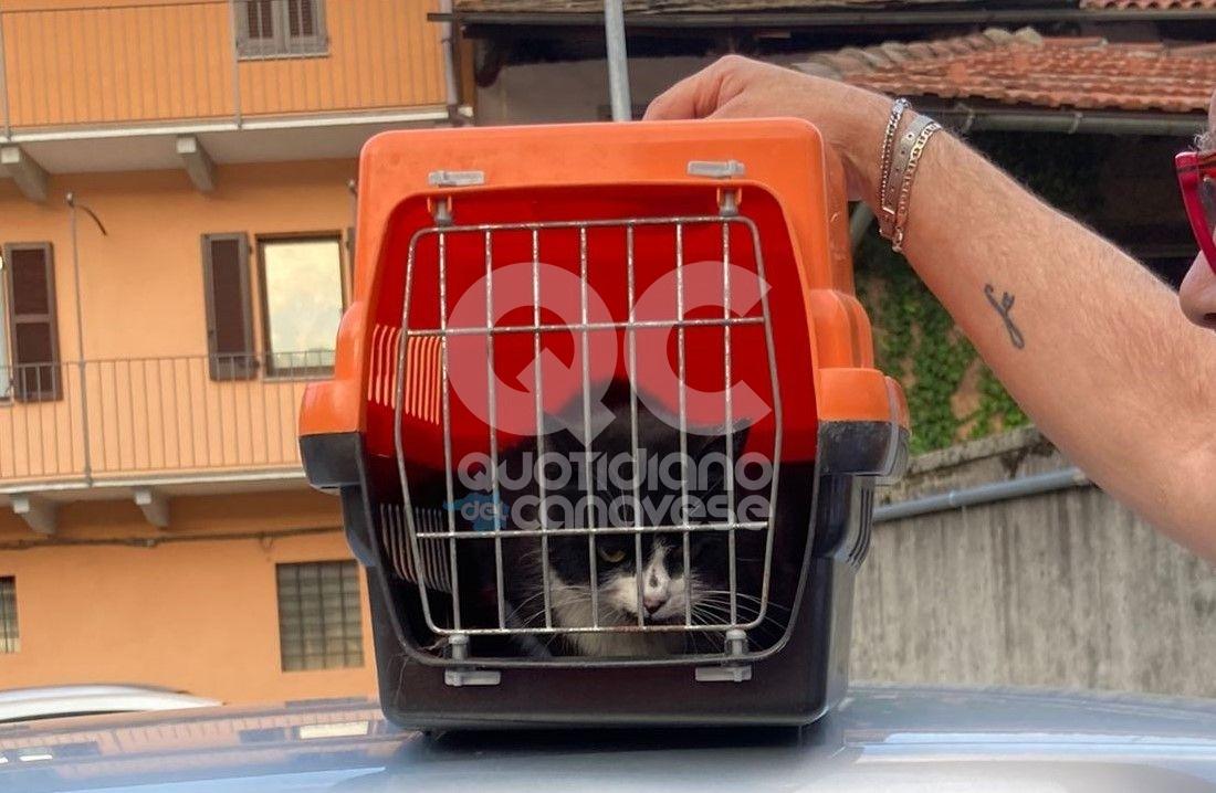 FORNO CANAVESE - Gatto incastrato nel motore di un'auto: salvato dai vigili del fuoco - FOTO