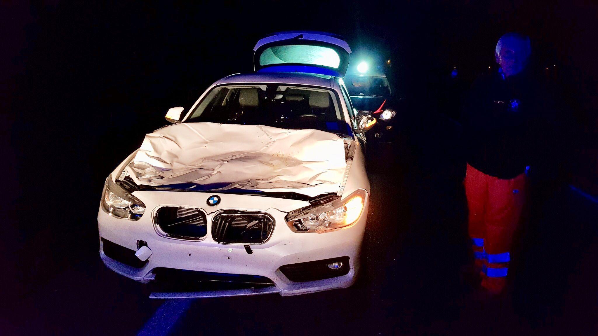 SALASSA-VALPERGA - Incidente stradale sulla 460: auto travolge una mucca - FOTO E VIDEO