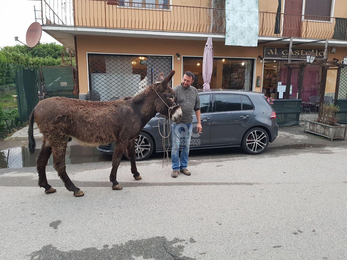 AGLIE' - Asino e pony a spasso sulla provinciale: traffico in tilt - FOTO e VIDEO
