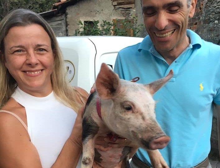 BORGOFRANCO D'IVREA - Ladri senza cuore rubano anche la maialina domestica malata: appello per ritrovarla