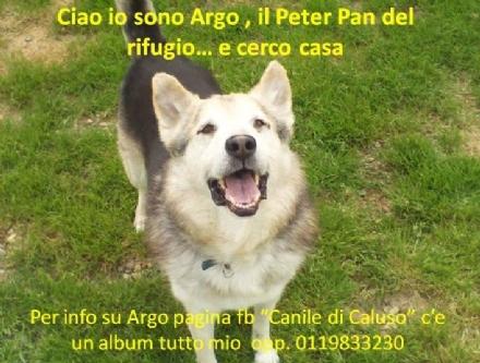 CALUSO - La storia di Argo, il Peter Pan del rifugio