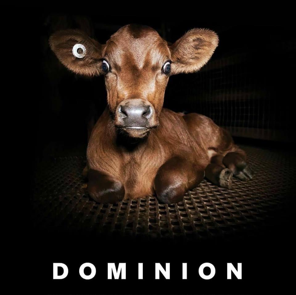 OGLIANICO - A Settimo la proiezione del documentario «Dominion»