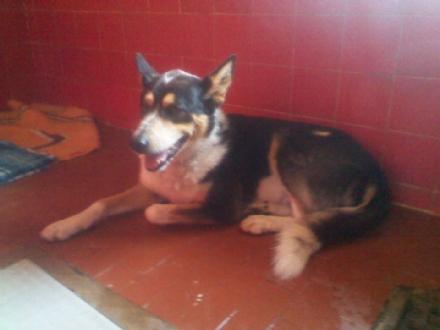 VISTRORIO - Cane ritrovato vicino alla diga