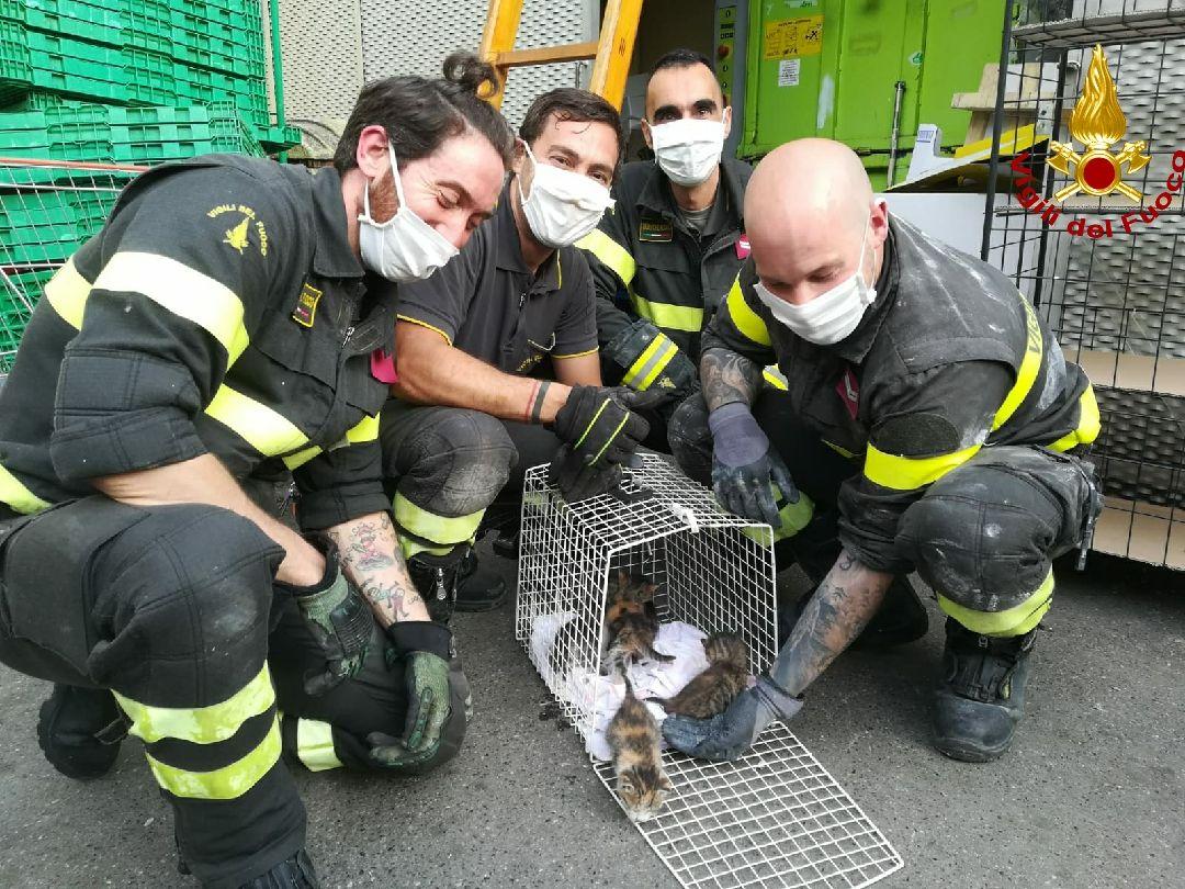 GATTINI IN SALVO - Incastrati in un muro, li recuperano i vigili del fuoco con la termocamera - VIDEO