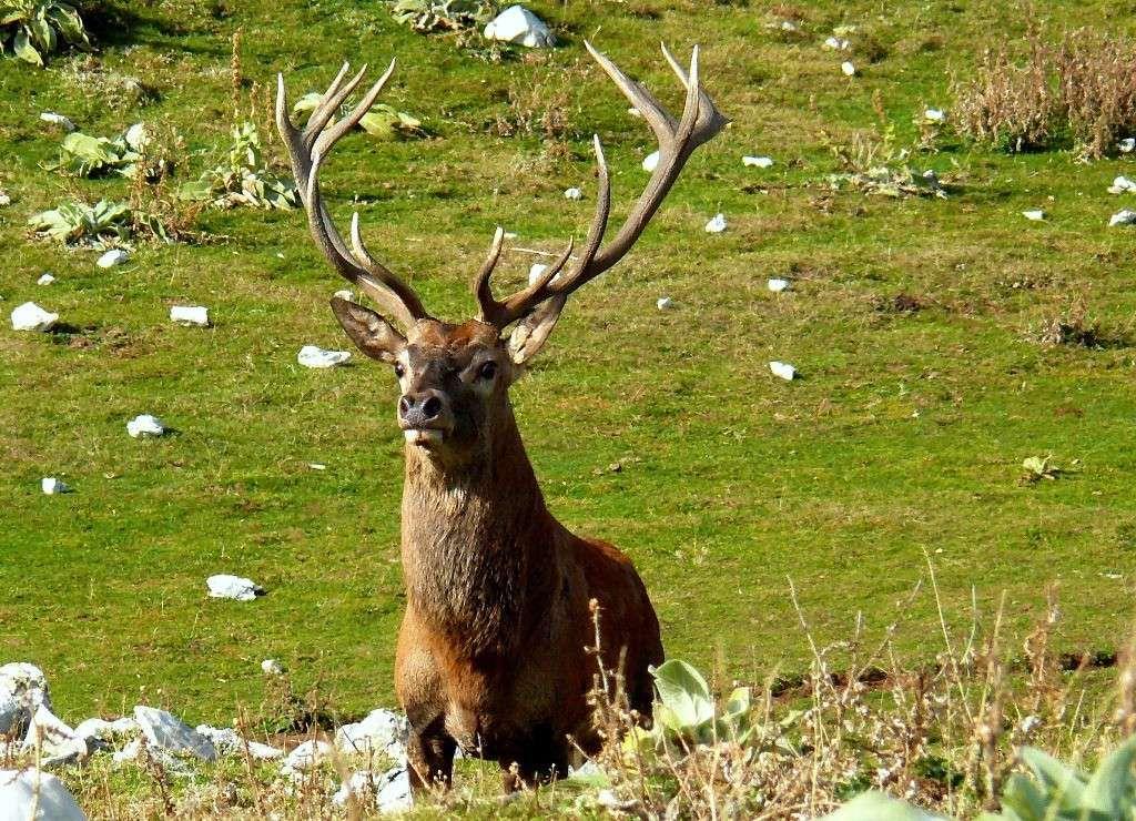 SPARONE - Cervo ucciso: i cacciatori prendono le distanze dal brutto episodio